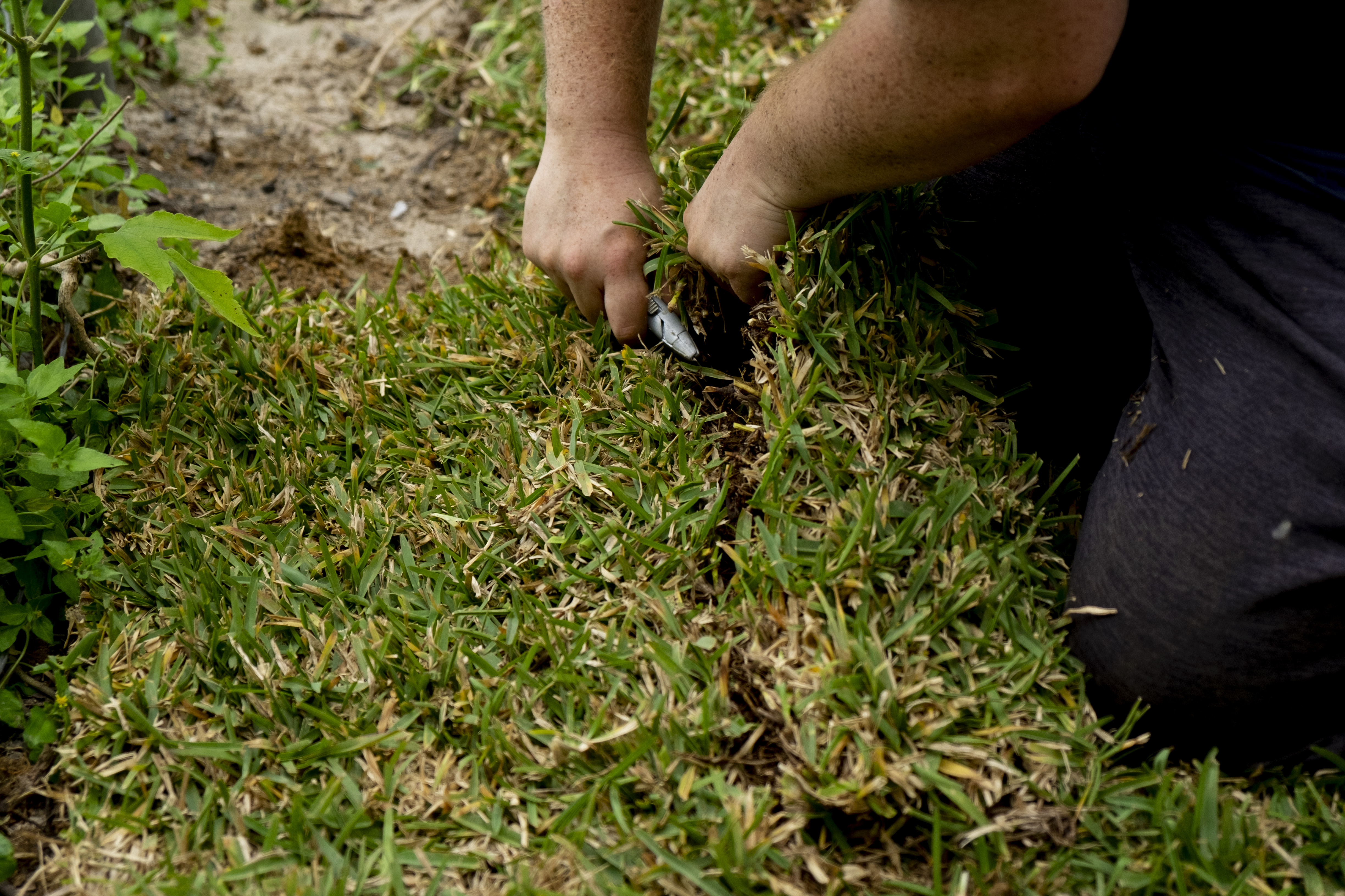 A pair of hands cut grass sod to put in a yard