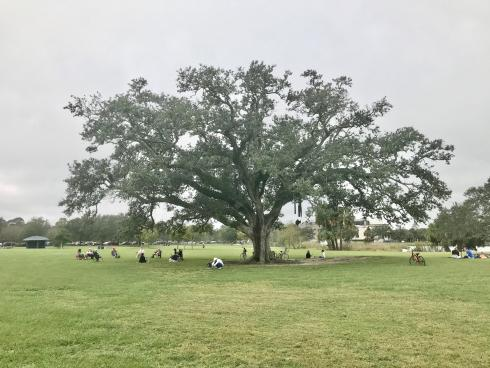 Large oak tree with cloudy sky above and people sitting under the tree.